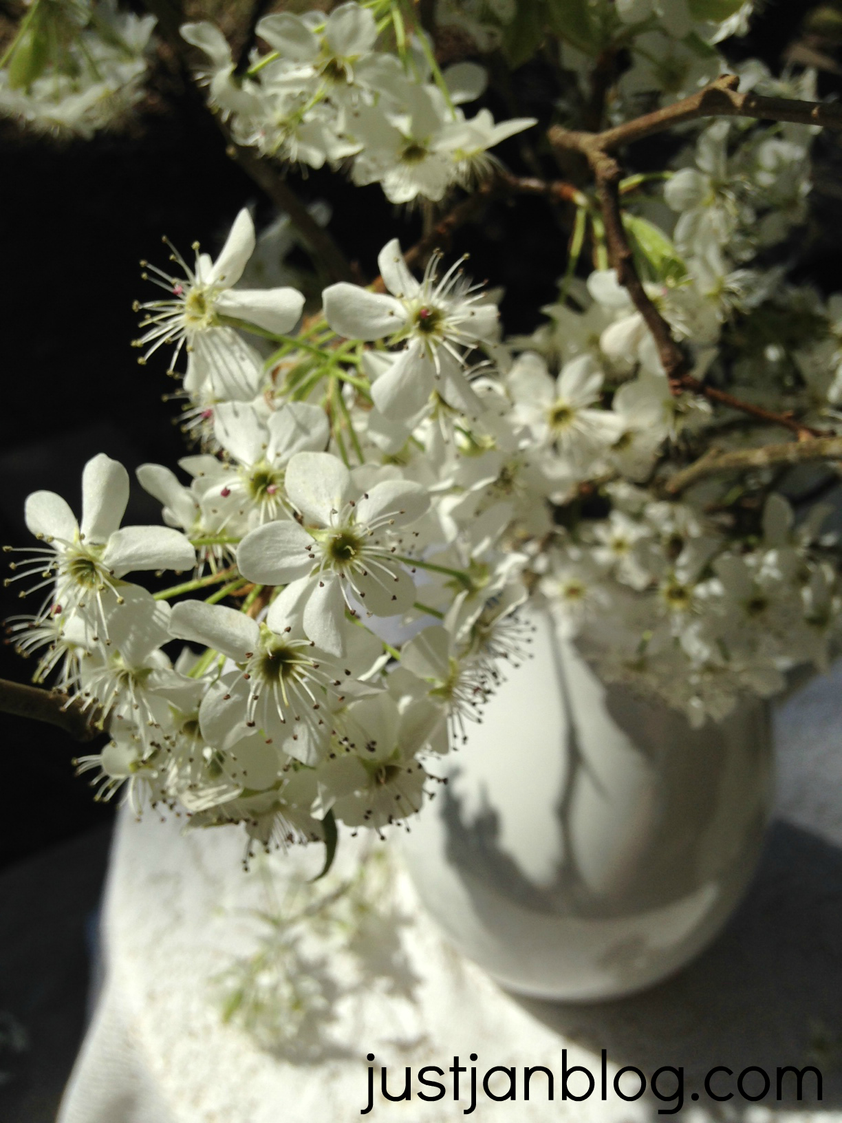 white bradford pear flowers