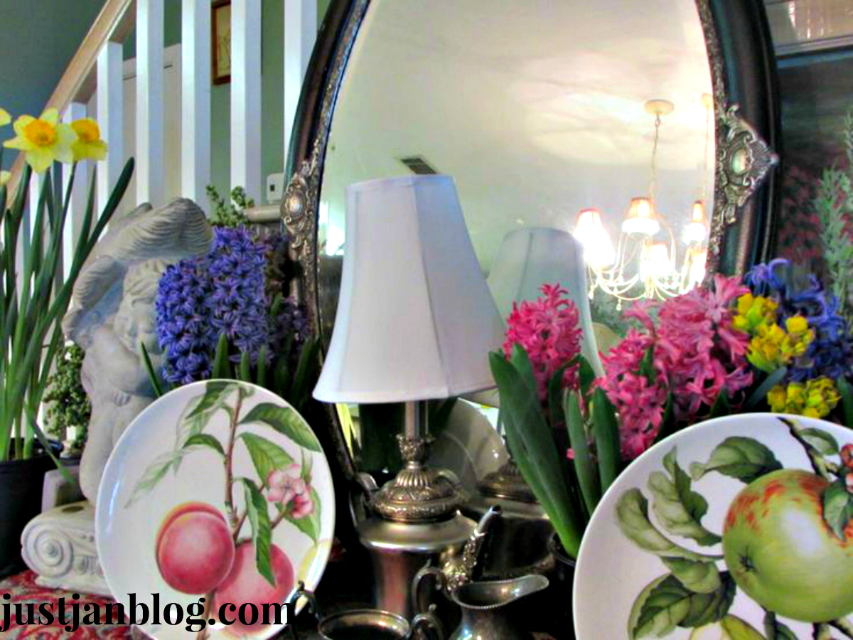 buffett spring plates hyacinth