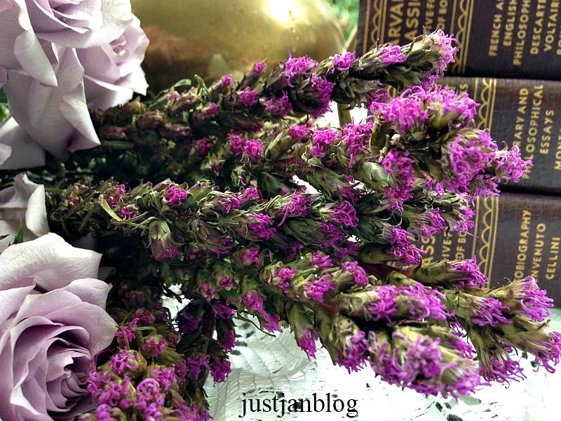 lavenderroses