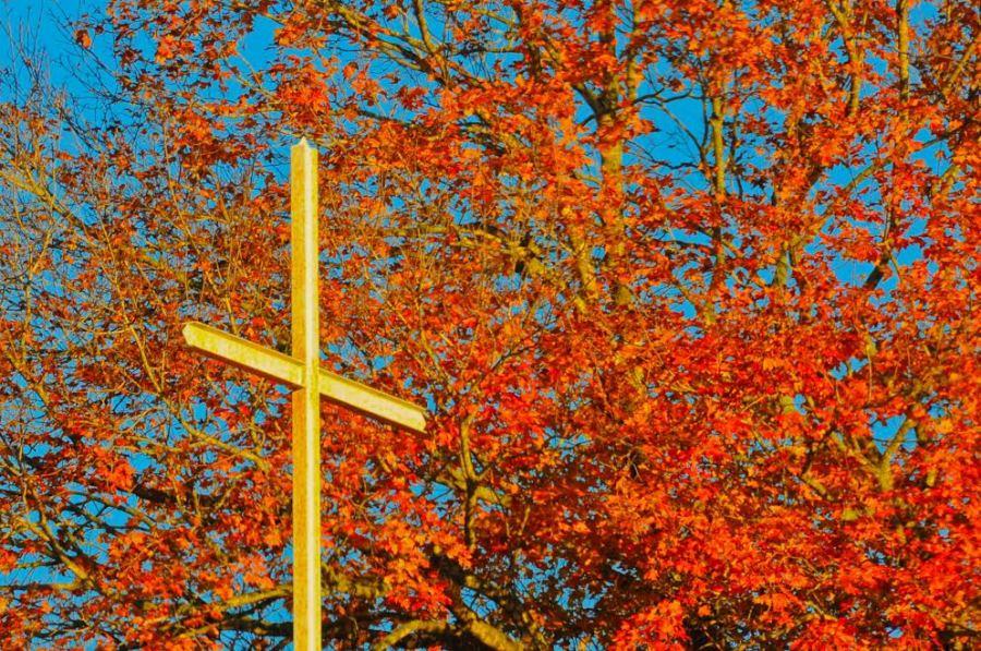 Autumn Cross