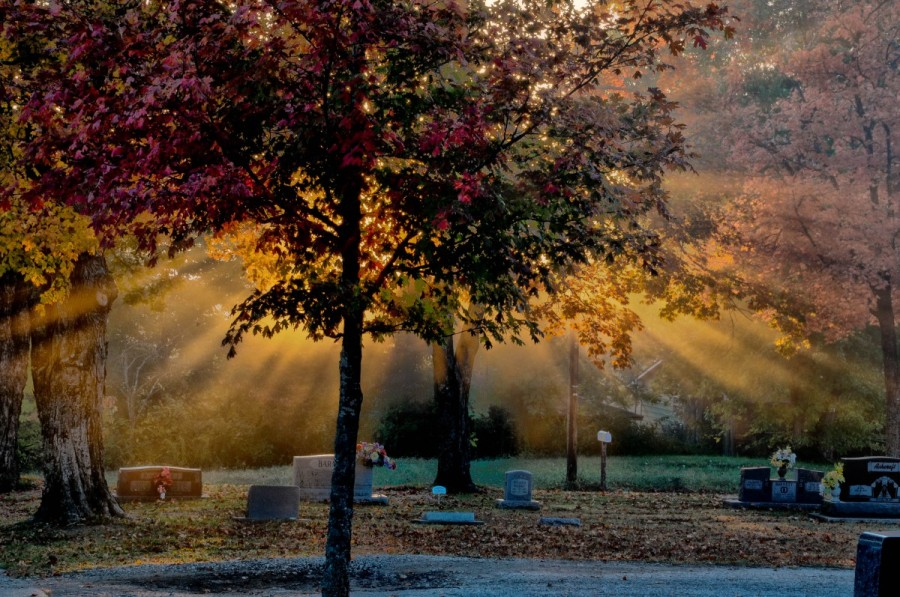 Sunlight on the Maple Trees