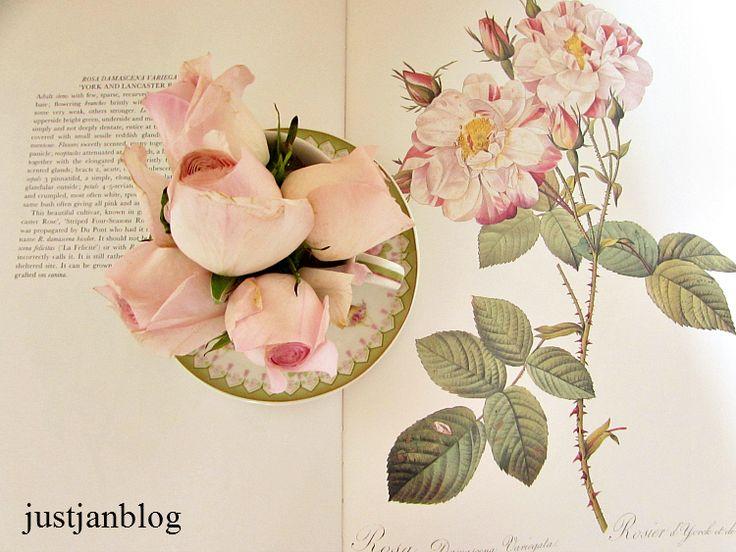 rosesinbook