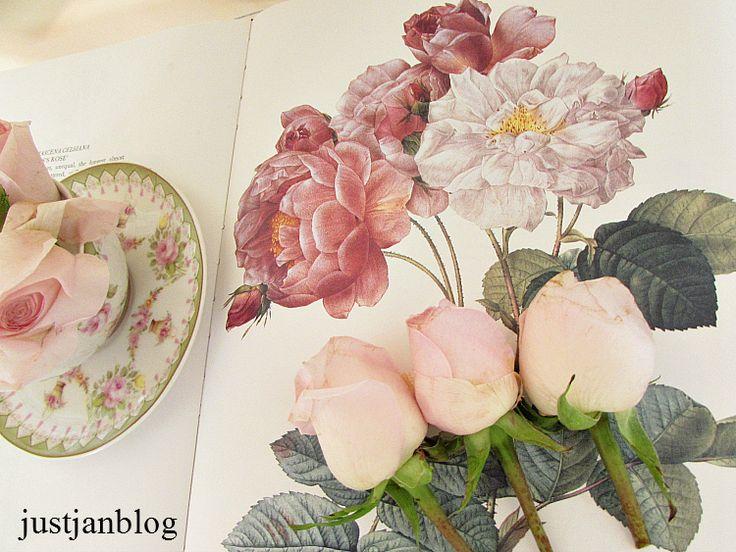 rosesinbook2