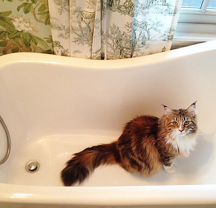 Jessika Goranson Lewand bathtub with kitty